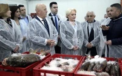 România trebuie să returneze UE 15 milioane de lei deoarece Bursa de Pește din Tulcea, inaugurată de Dăncilă în aprilie, nu este funcțională